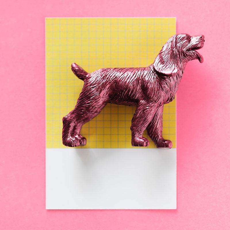 Pantone Pop rose chien